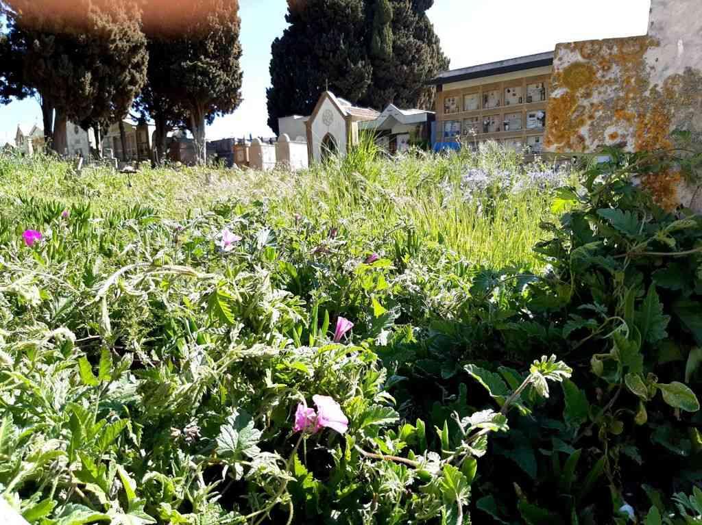 """Immagine articolo: Salaparuta, presentata interrogazione da consigliere comunale di """"ViviAmo Salaparuta"""" su cimitero"""