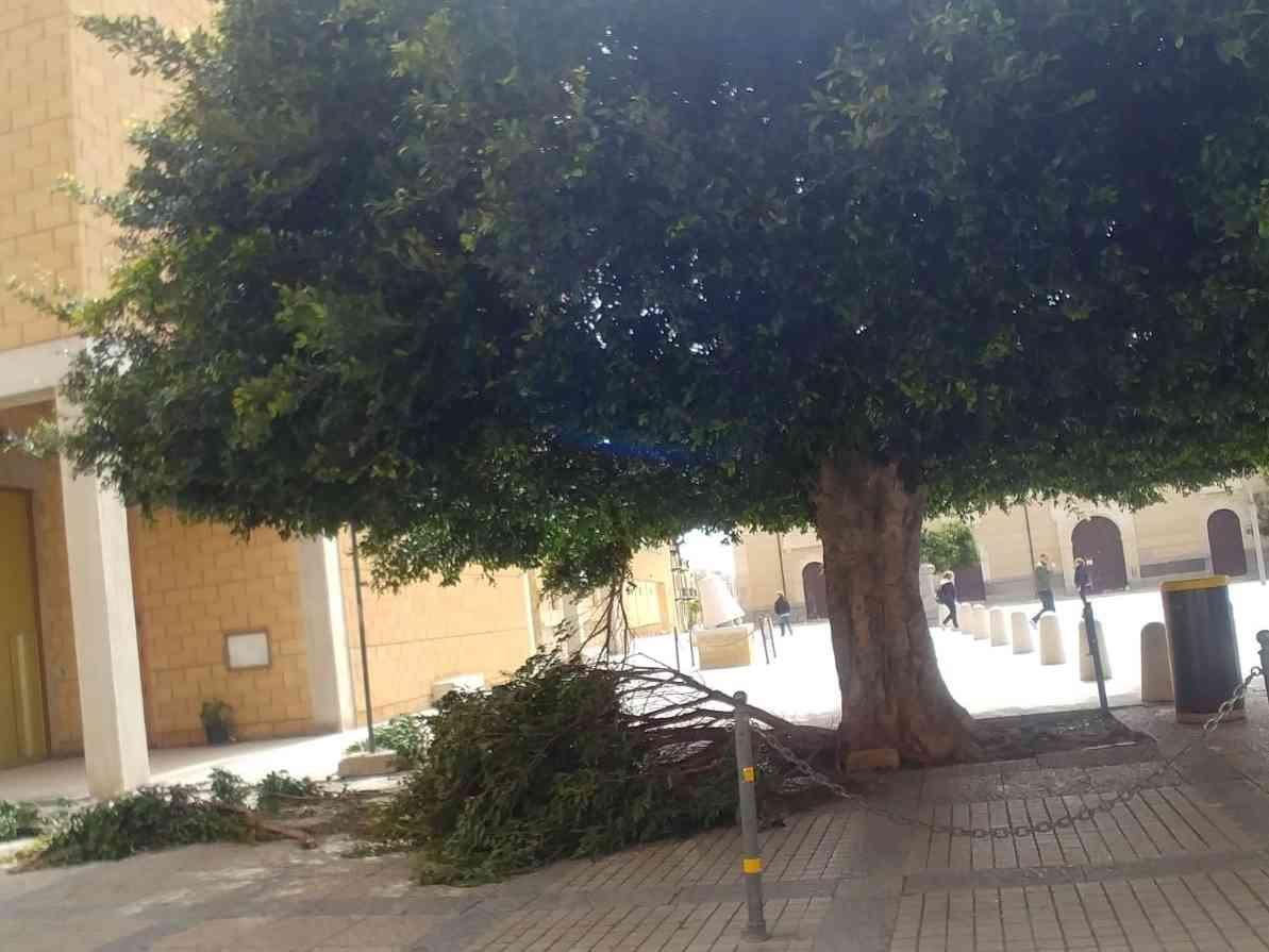 Immagine articolo: Menfi. Per Pasquetta forti raffiche di vento, cadono alcuni rami