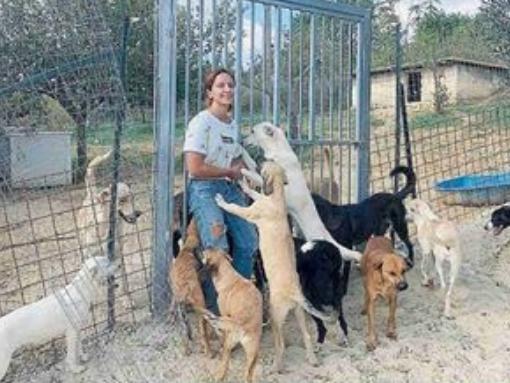 Immagine articolo: Santa Margherita, un canile per salvare i cani abbandonati. Il sogno di Chiara Calasanzio diventa realtà