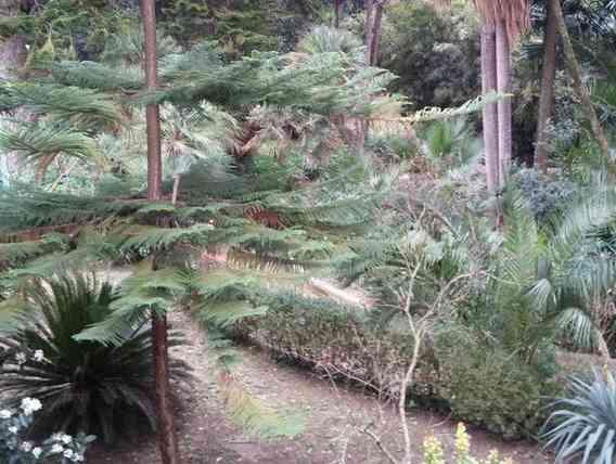 """Immagine articolo: Santa Margherita di Belice, finanziato progetto per i """"Giardini del Gattopardo"""""""