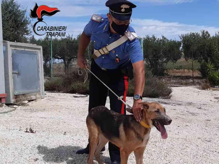 Immagine articolo: Salaparuta, cane vittima di maltrattamenti messo in salvo dai Carabinieri. Denunciata la proprietaria