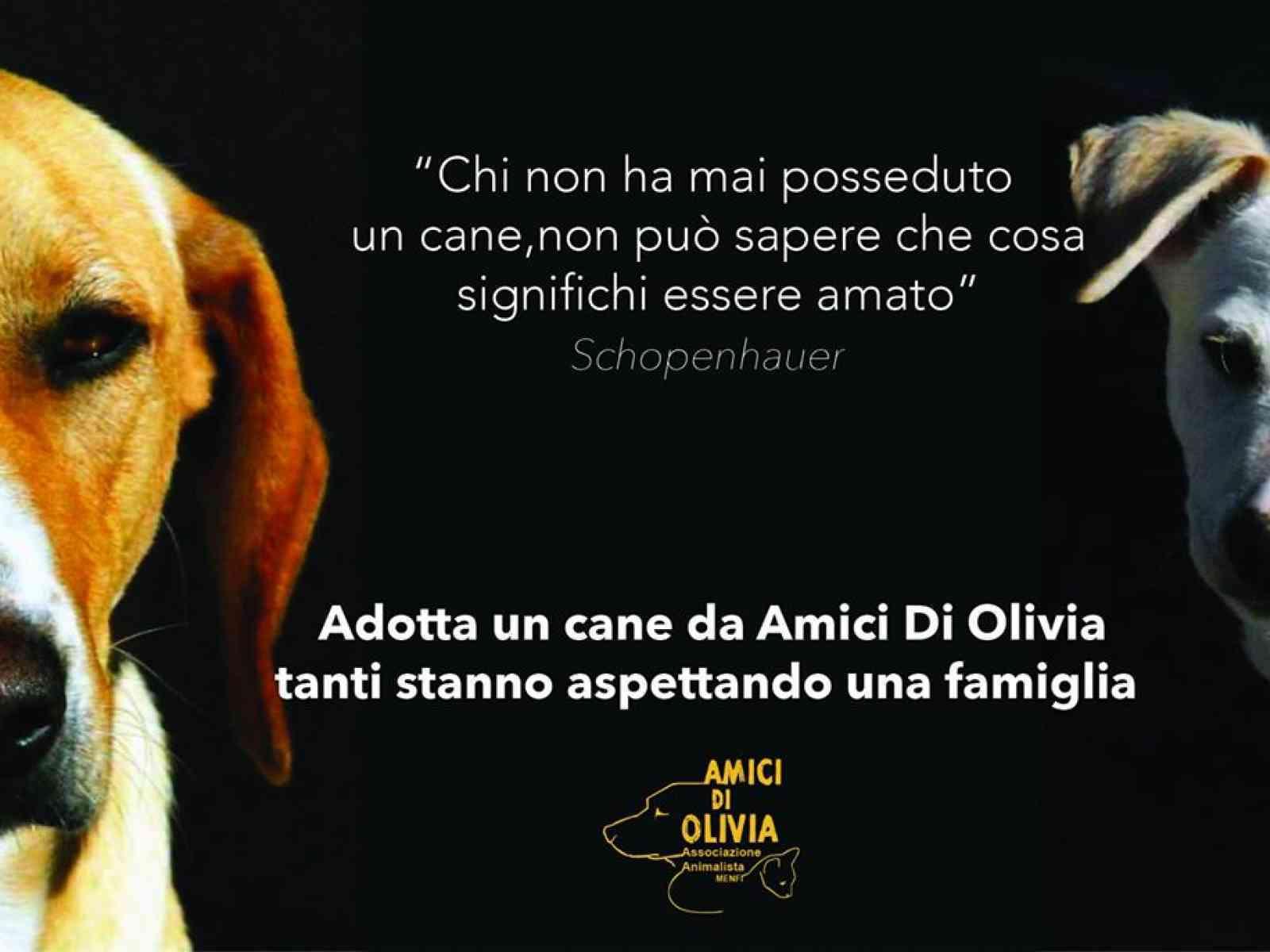 "Menfi. L'associazione ""Amici di Olivia"" costretta a lasciare l'ex mattatoio. ""Cani custoditi privatamente"""