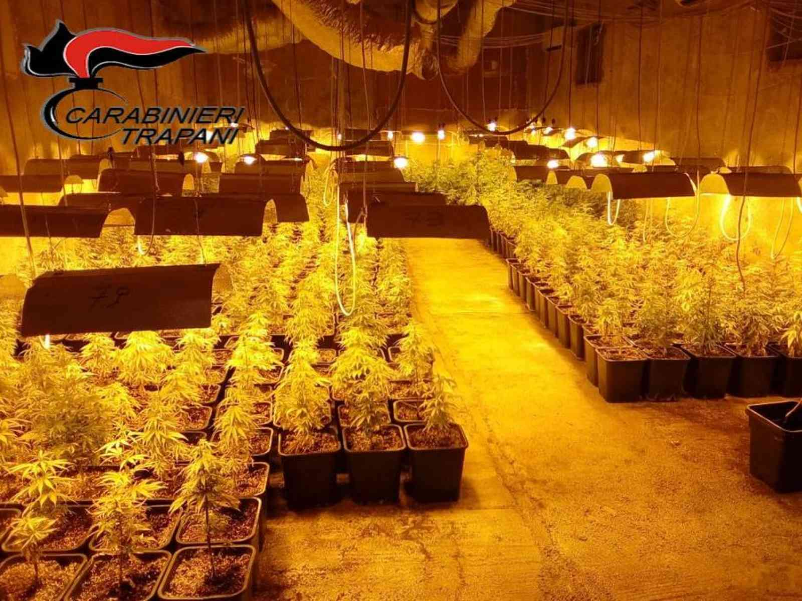 Poggioreale. Carabinieri scovano maxi-serra di marijuana, 651 le piante