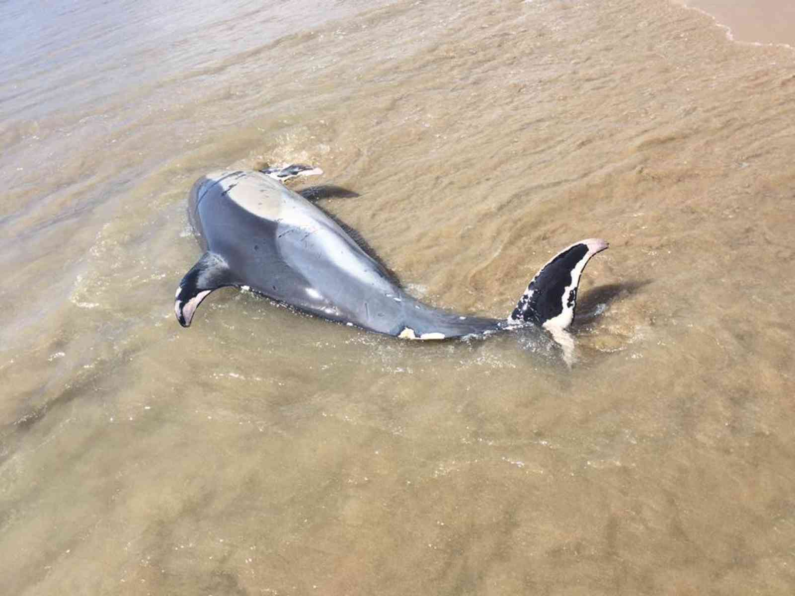 Menfi. Un delfino e una tartaruga trovati morti a Porto Palo e Fiori