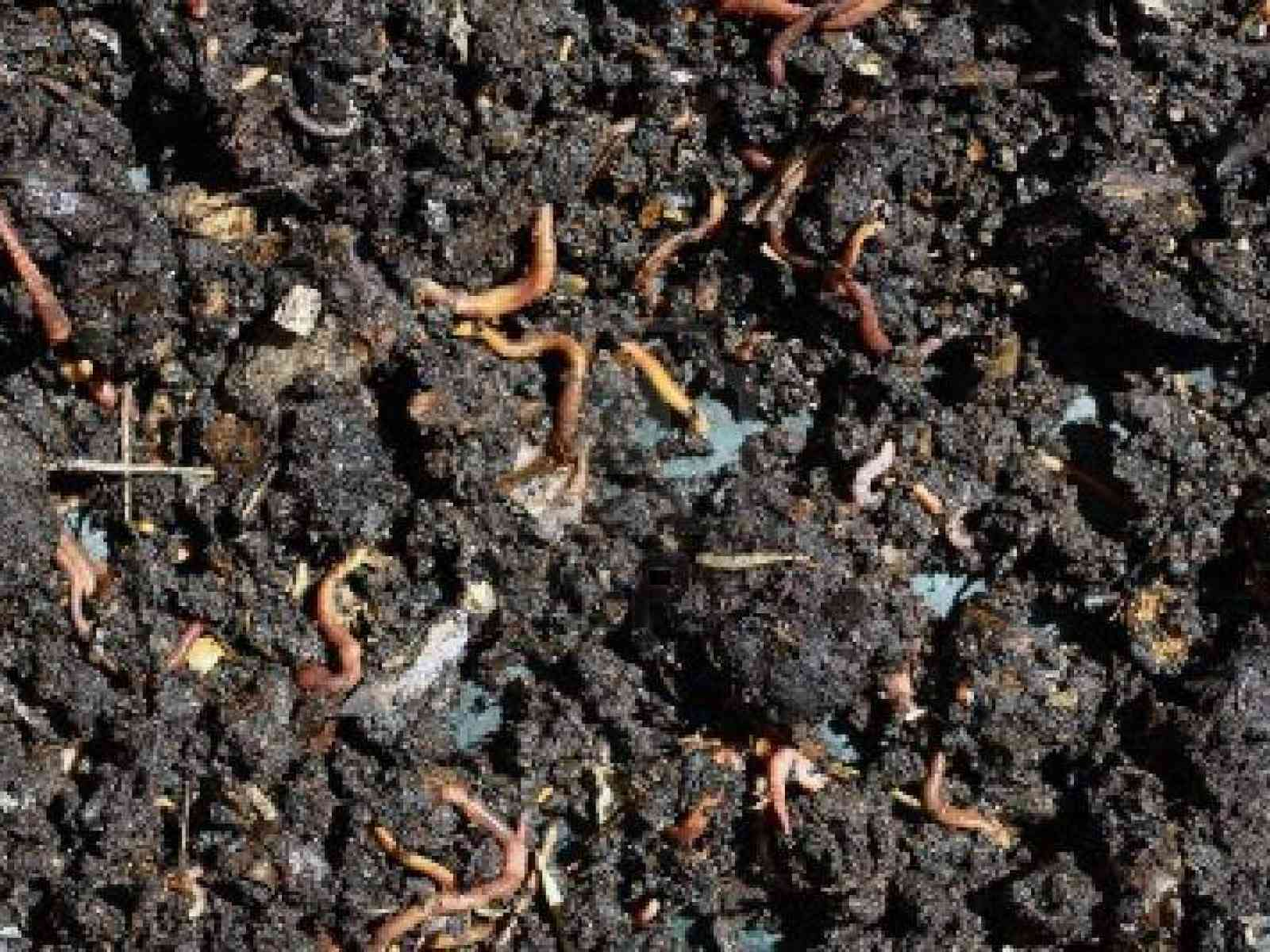 Presto l'ARO rifiuti Poggioreale e Salaparuta. I lombrichi rossi trasformeranno l'organico in concime