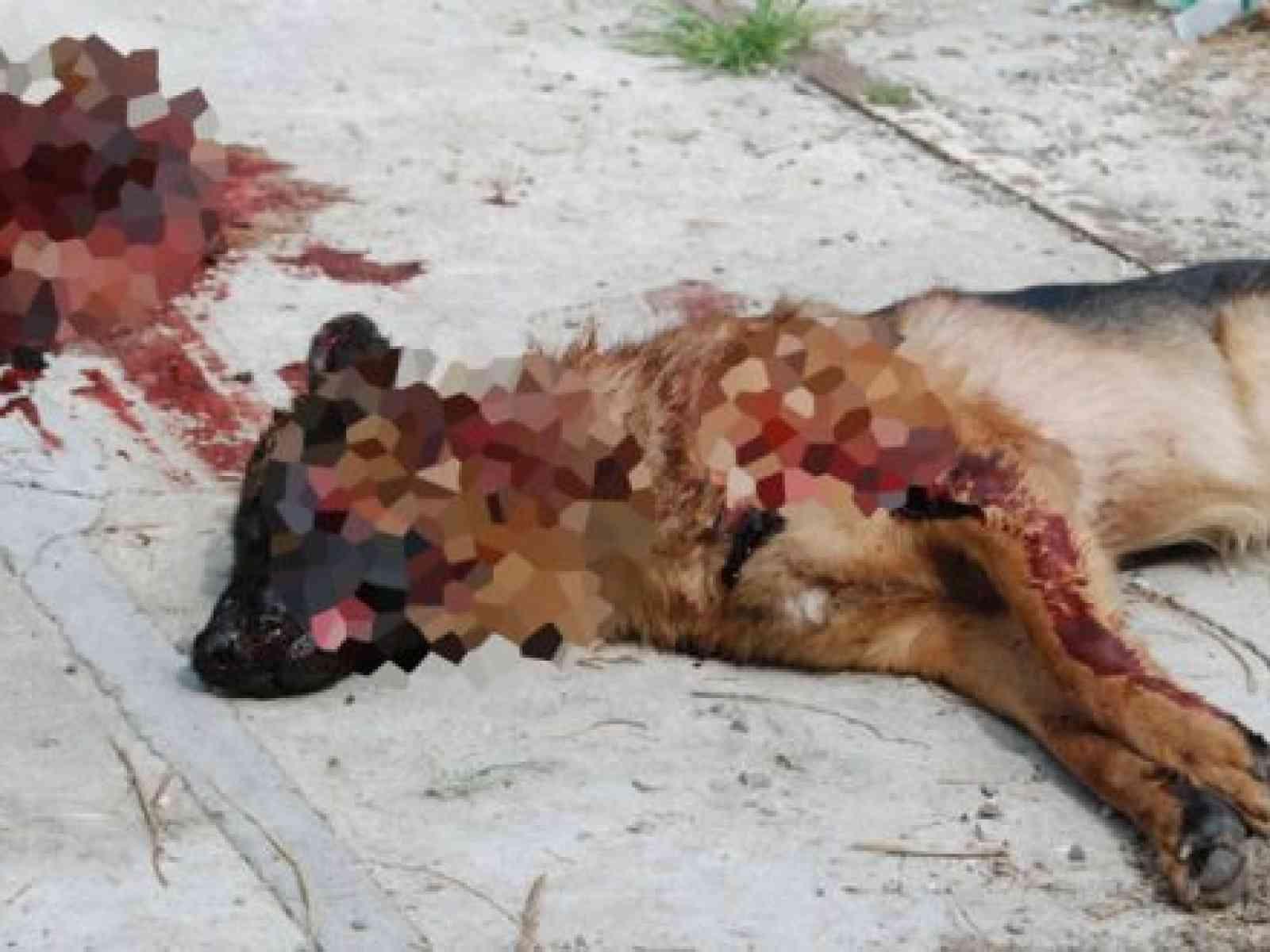 Cane randagio ucciso a colpi di fucile