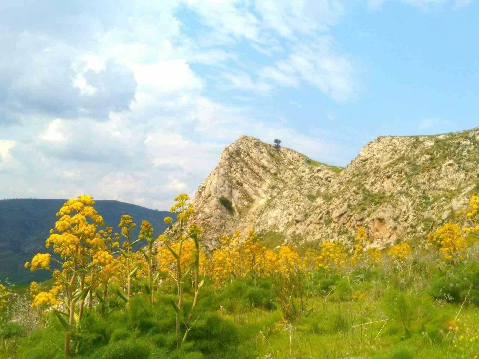 """""""Viaggio nella Natura del Belice"""". La natura nascosta si rivela, oggi, domenica 8 aprile"""