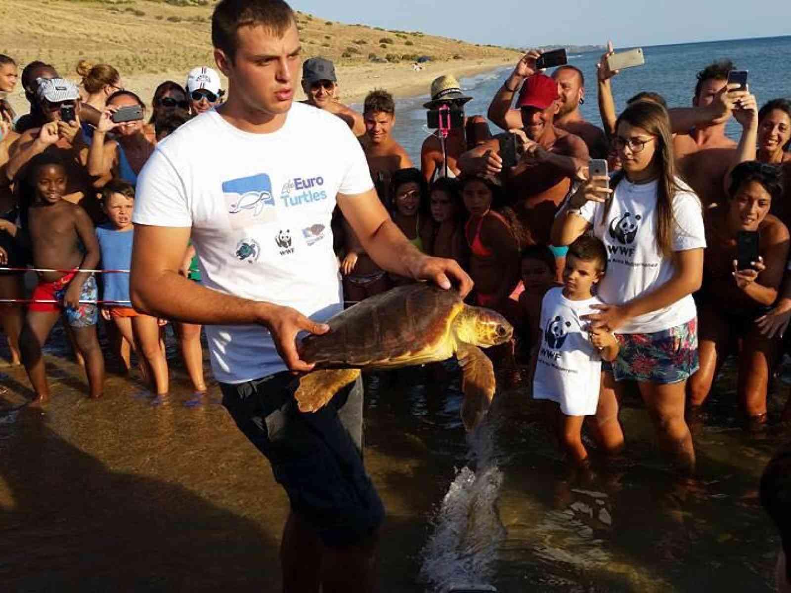 Menfi. Liberata la tartaruga Caretta Caretta, salvata da un amo nell'esofago