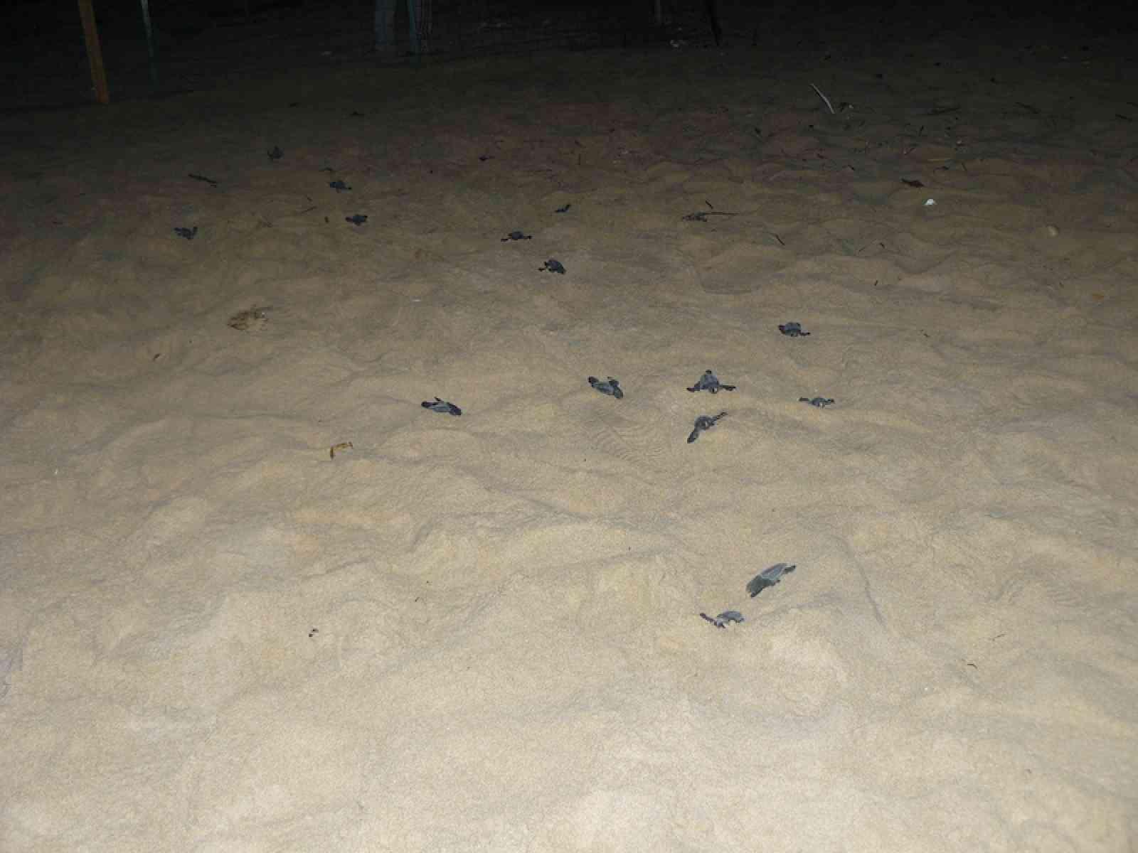 Menfi, approvato il progetto europeo LIFE a sostegno delle tartarughe Caretta caretta