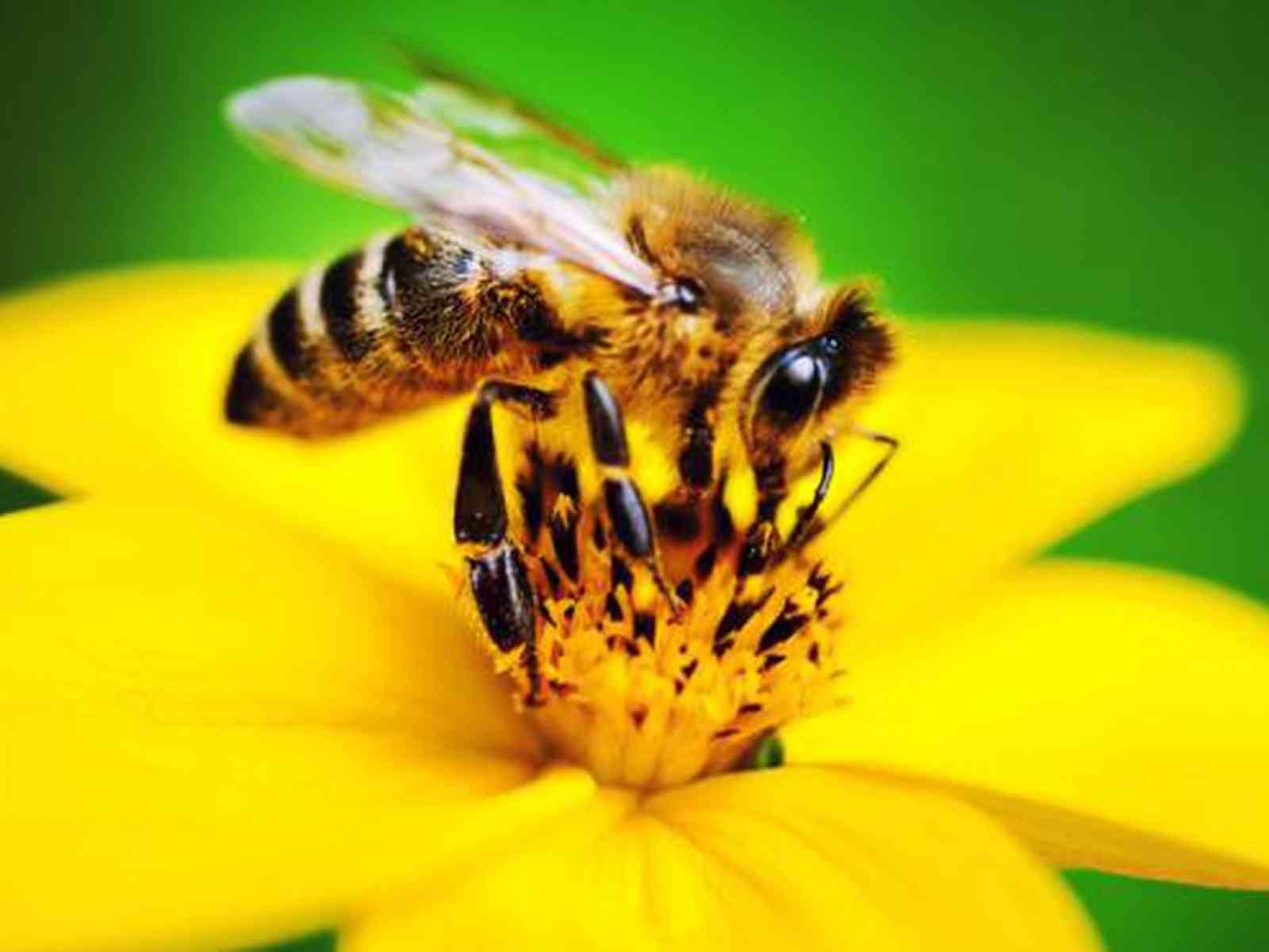 Immagine articolo: Danni all'apicoltura, in Sicilia via libera allo stato di calamità naturale