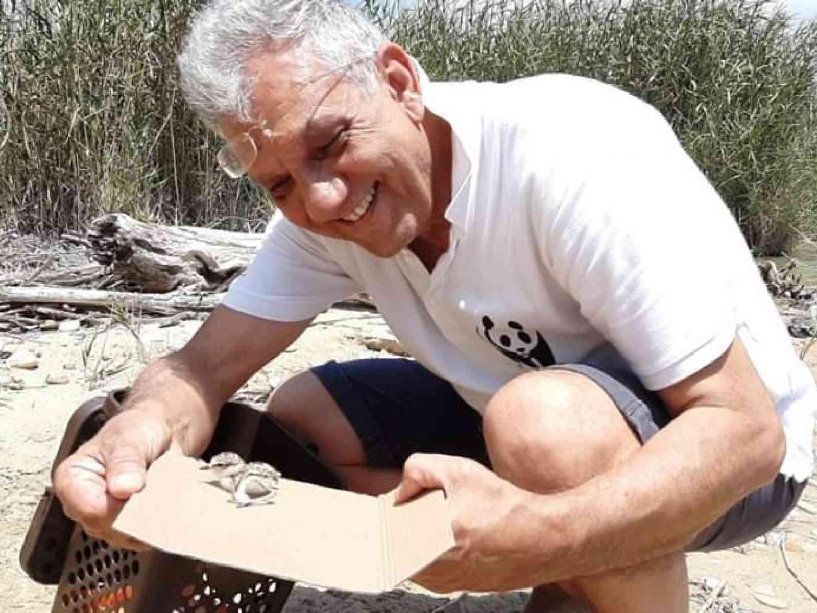 """Immagine articolo: A Ribera nidifica il """"fratino"""". Eccezionale scoperta del Wwf, il trampoliere arriva dall'Africa"""