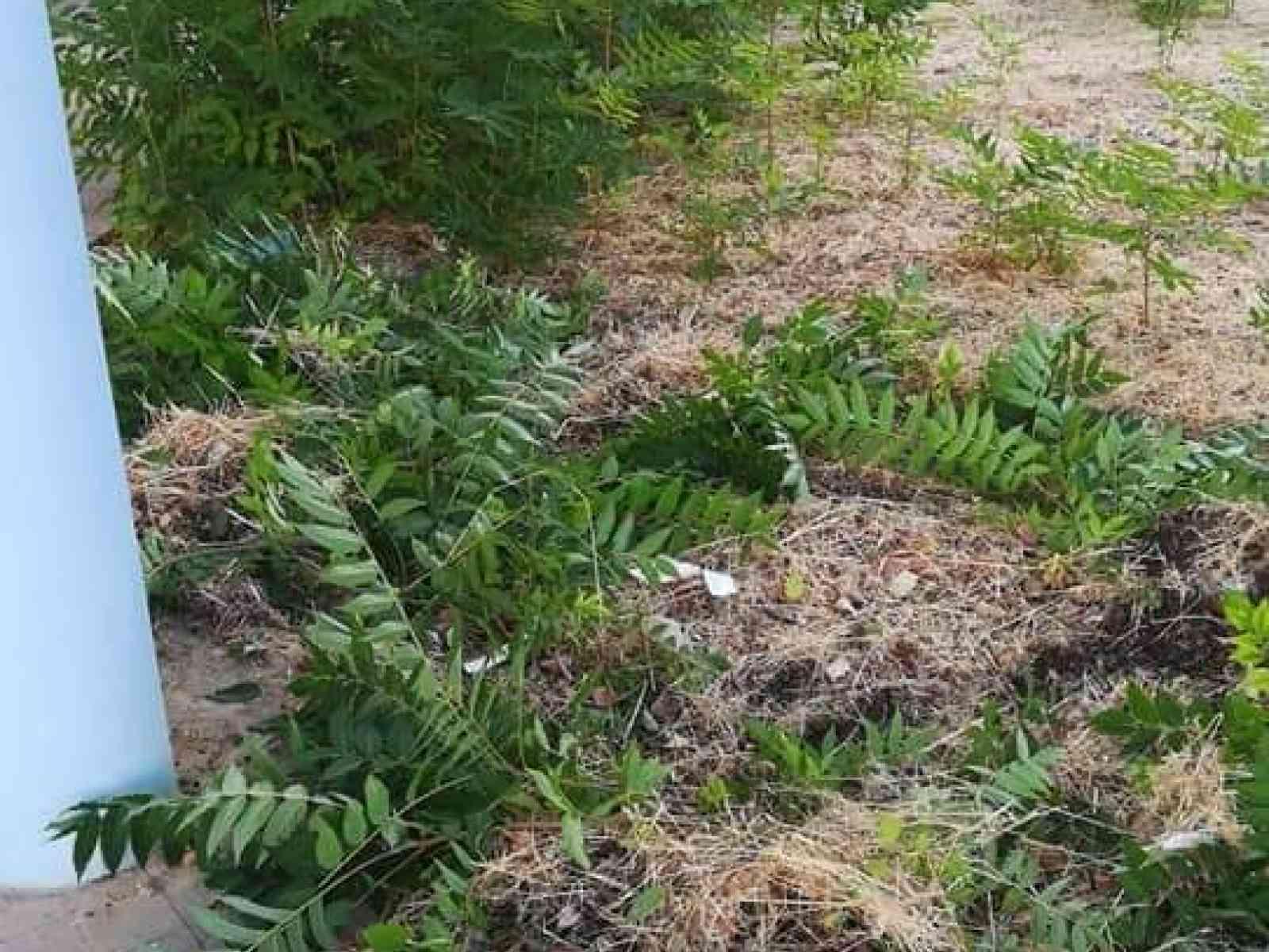 Immagine articolo: Menfi, al via la pulizia delle aree esterne plessi scolastici