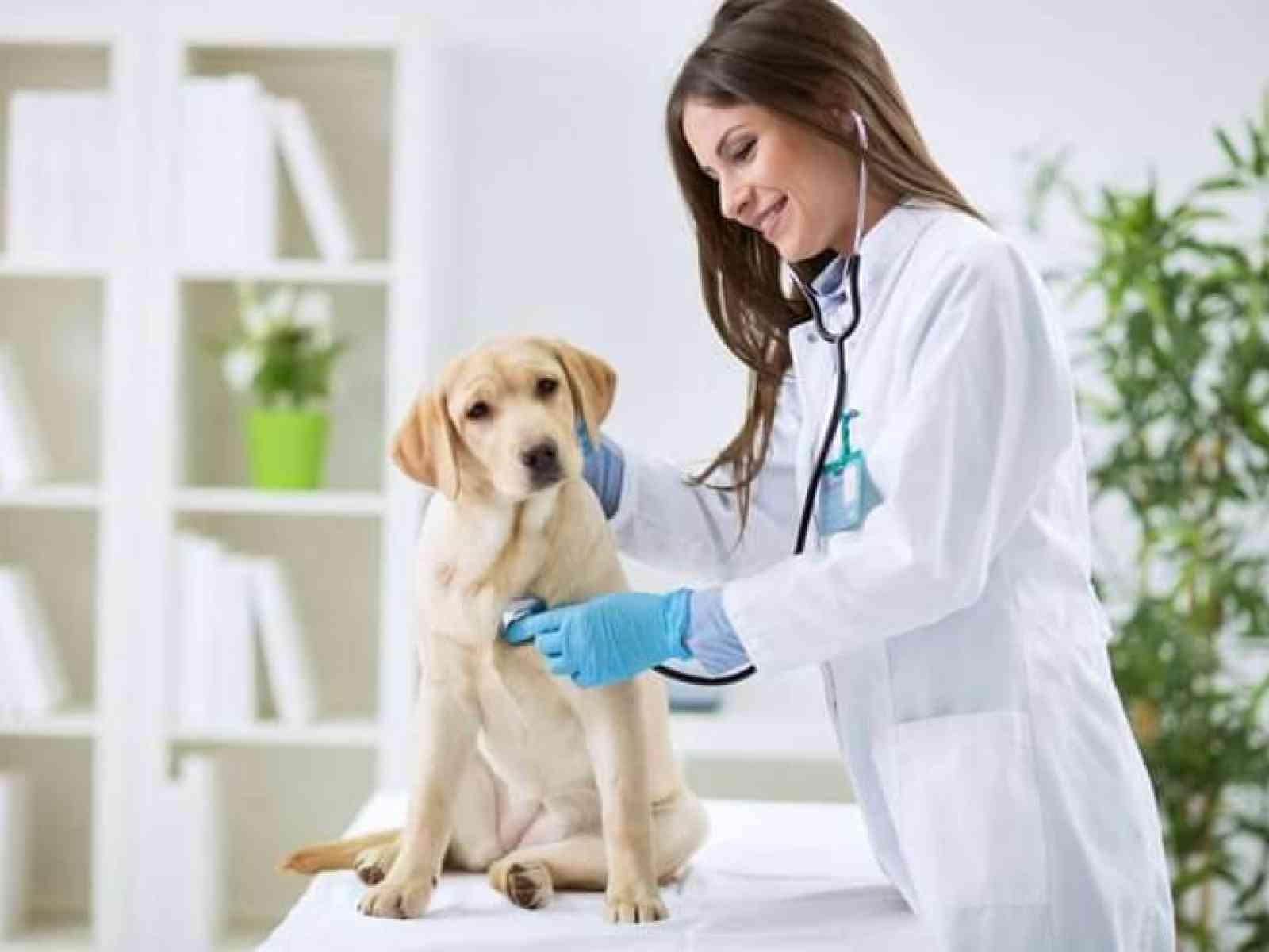 Immagine articolo: ARS, disegno di legge su aumento ad almeno 30 ore settimanali dell'incarico a tempo indeterminato dei veterinari specialisti