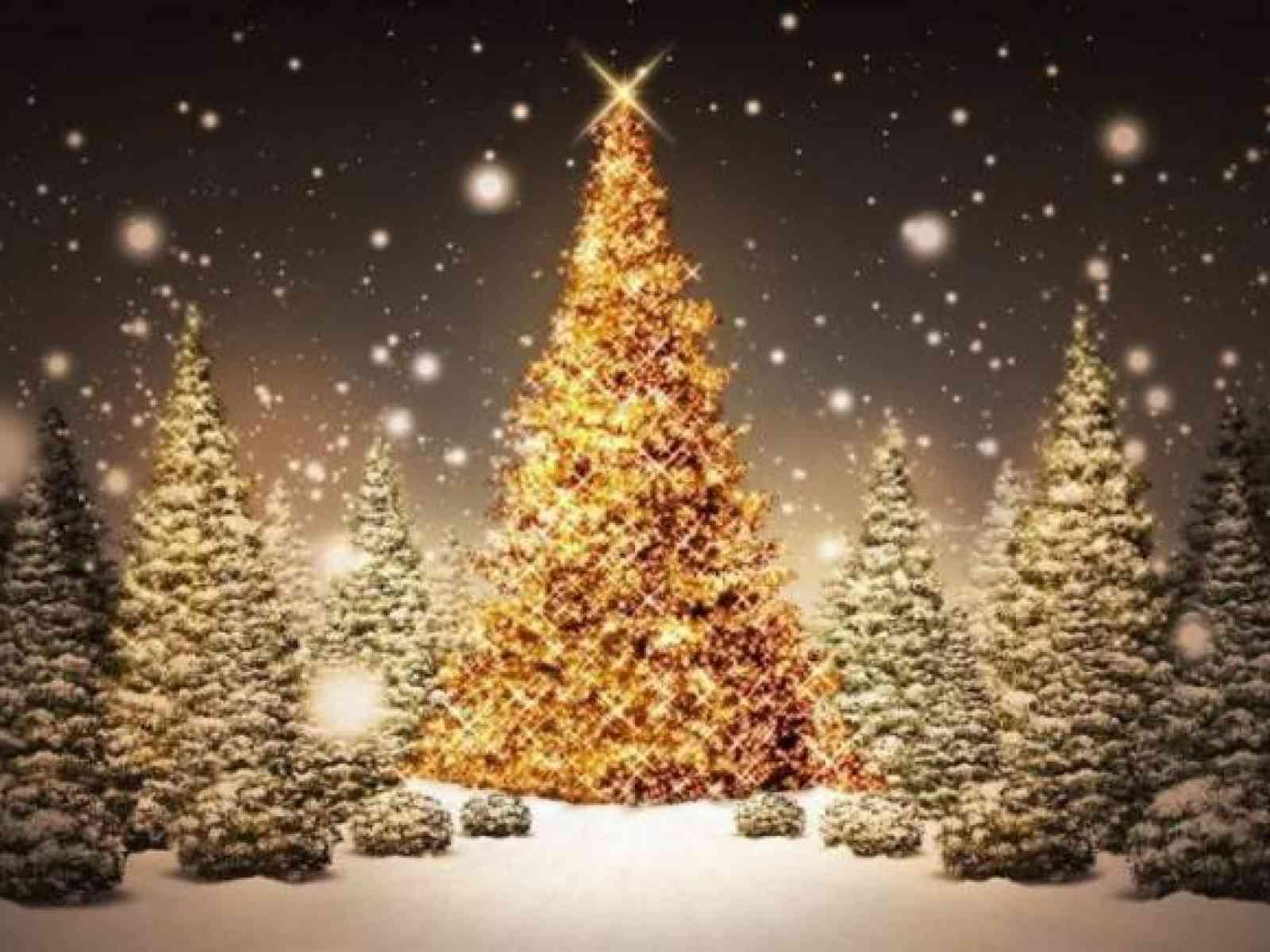 """Immagine articolo: """"Accendiamo il Natale"""" a Menfi: Comune offre 50 alberi da posizionare davanti le attività commerciali"""