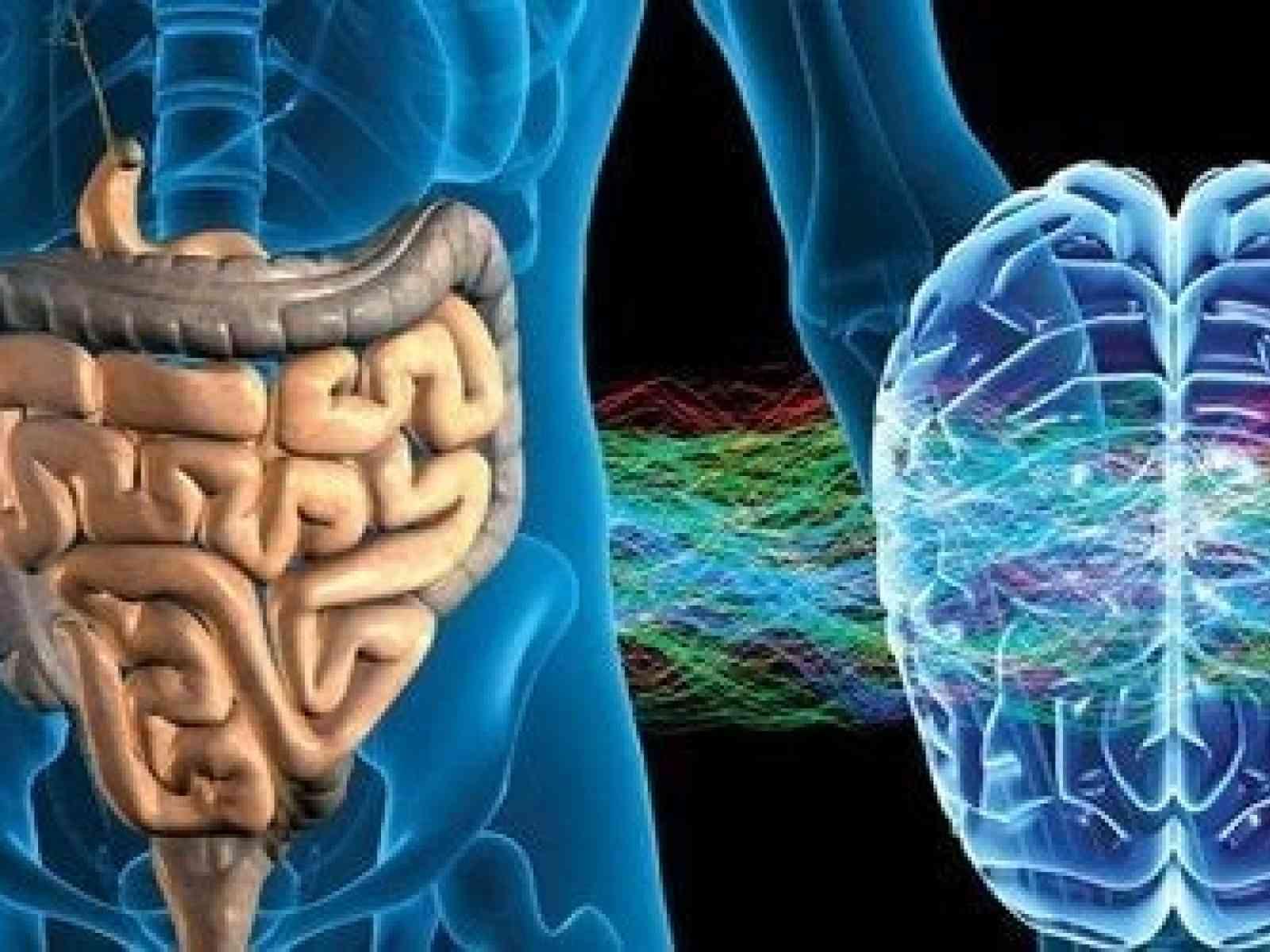 Immagine articolo: Alla scoperta del Sistema nervoso enterico, regolatore dei processi digestivi