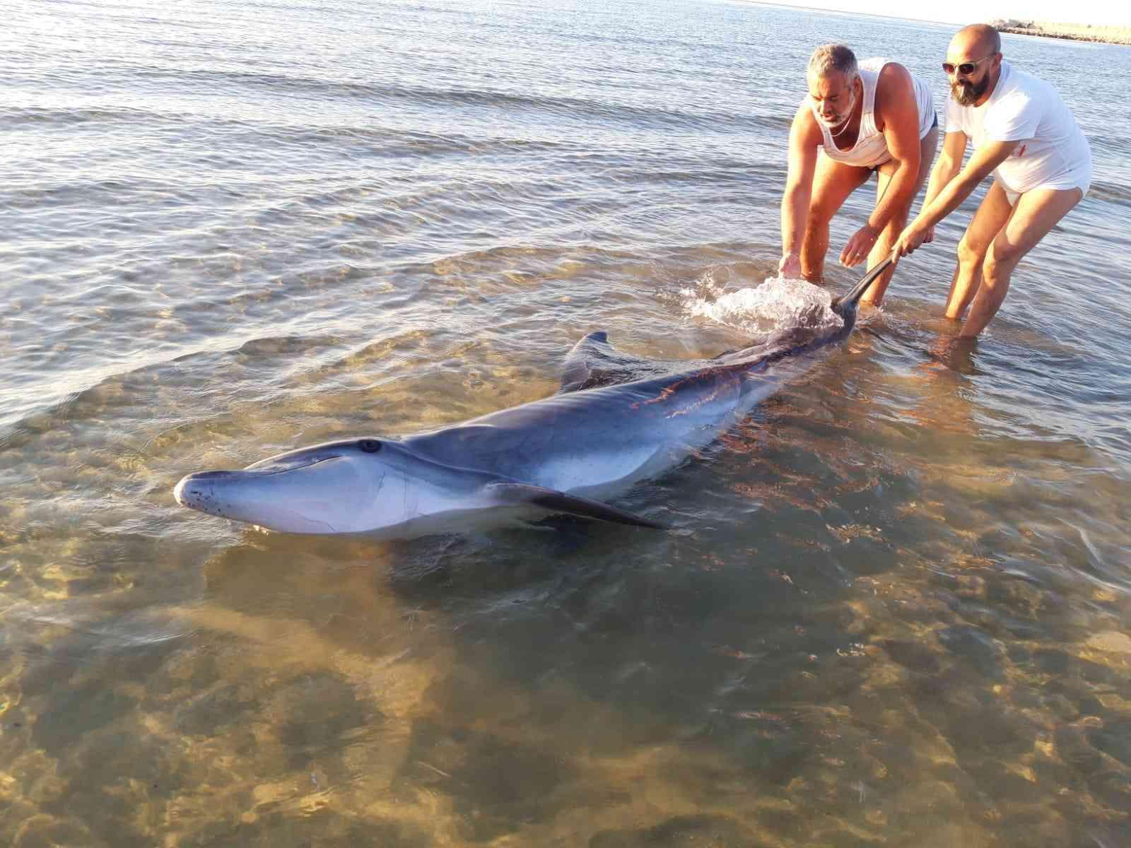 Immagine articolo: Porto Palo, delfino  arenato sulla spiaggia riprende il largo grazie ad alcuni bagnanti